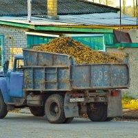 """Пюрешку"" любят все! :: A. SMIRNOV"