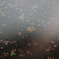 Туман после дождя :: Алексей Корнеев