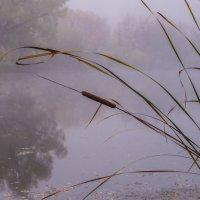 Камыши в тумане! :: Борис Кононов