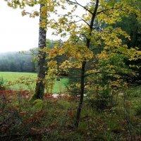 В лесу :: Юрий Бондер