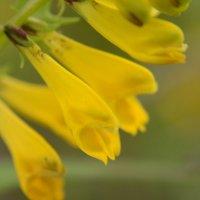 Цветы северного леса :: Татьяна Калинина