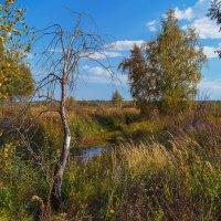 Вот такая осень :: Андрей Дворников