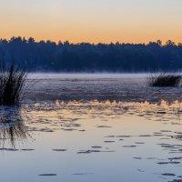 Утренний туман :: Николай Николенко