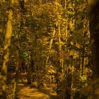 Осенний лес :: Георгий Морозов