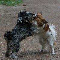 Поговорим по собачьи :: Дмитрий Шишкин