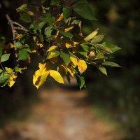 Осень :: Paulina Geseltin