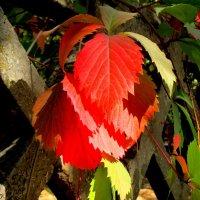 Краски осени :: Нина Бутко