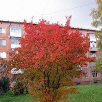 Огненное деревце. :: Мила Бовкун