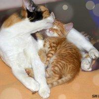 Мама - первое чувство, слово и вечная любовь :: Наталья (ShadeNataly) Мельник