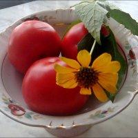 Санвиталия и помидоры :: Нина Корешкова
