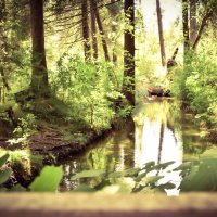the magical forest..... :: Mila Dzubina