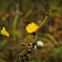 Цветочек осени) :: Карина Картина