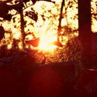 Солнечная паутина. :) :: DEIDARA TSUKURI
