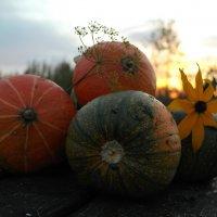 Оранжевое настроение. :: Елена Фокина