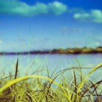 Трын трава :: Котэ(Данил) Чеширское