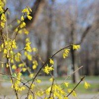 Чем глубже в осень, тем ближе весна! :: Леонид