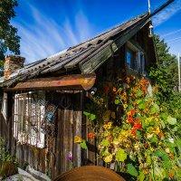 У бабушки в деревне. :: Maria Miller