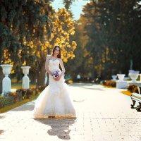 Золотая осень :: Mitya Galiano