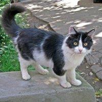 Муся (кошки моего подъезда) :: muh5257