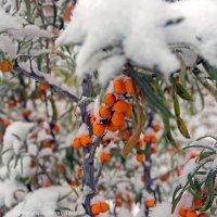 С 1 - м октября и с 1 - м снегом! :: Алексей Белик