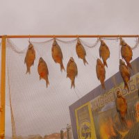 Живая рыба! :: Ирина Олехнович