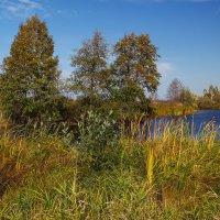 Малиновское озеро 2 :: Андрей Дворников
