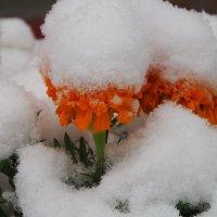 Первый снег... :: Александр Попов