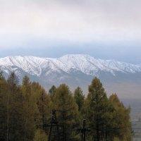 Уже выпал снег... :: Ольга Иргит