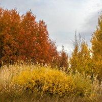 краски осени, :: александр варламов