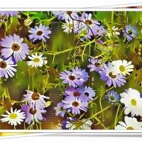 Картинки лета :: Любовь Чунарёва