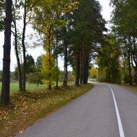 Осенняя дорога. :: zoja