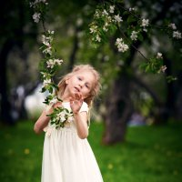 Яблони в цвету :: Константин Прокофьев