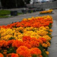 Цветы :: Михаил Вандич