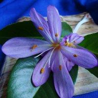 Цветы октября... :: Lilly
