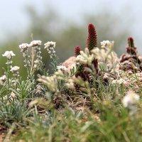 Байкальская флора :: Татьяна Нижаде