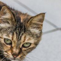 Коктебельская кошка приходила ко мне столоваться :: Николай Ефремов