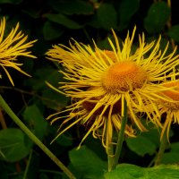 Осенние цветы. :: Александр Атаулин