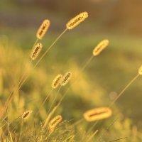 Золото сентябрьских закатов :: Rimma Telnova