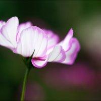 Осенний цветок :: Annie Makovskaya
