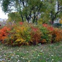 Осенний куст :: Вера Щукина