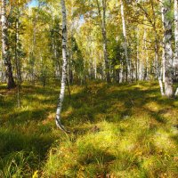 Уже не лето,но еще не осень... :: Александр Попов