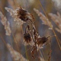 Осенние цветы :: Mavr -