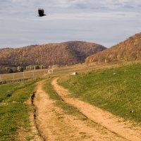 Сельская дорога :: Zifa Dimitrieva