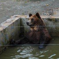 Водные процедуры :: Александр Марусов