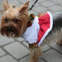 Собака - 9. :: Руслан Грицунь