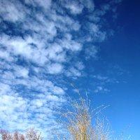Осеннее небо :: Ольга Иргит