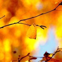 Пожар из осенних листьев :: Alexey Bogatkin