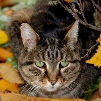 Осенний кот... :: Татьяна Латышева