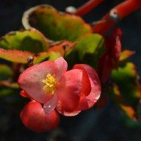 Необычный цветок :: Екатерина