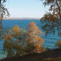 Решили две березки искупаться в Ангаре... :: Александр Попов